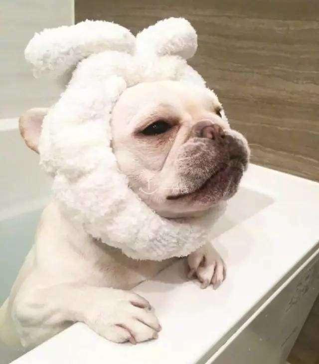 Armani 阿玛尼 狗年 限量 粉饼