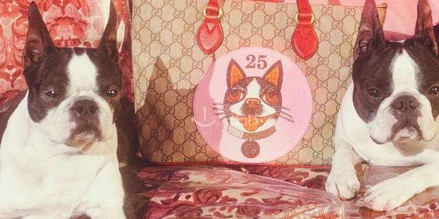 Gucci 古驰 狗年 限量 包包